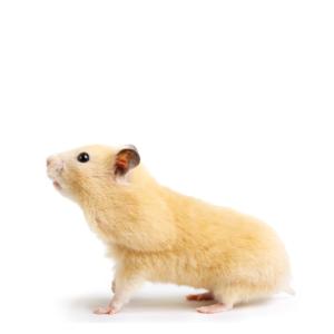Hamsterprodukter