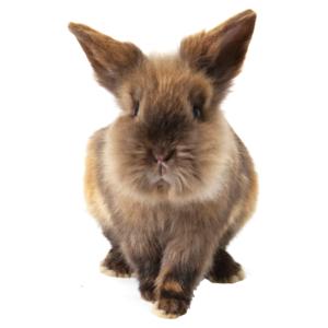 Kaninprodukter