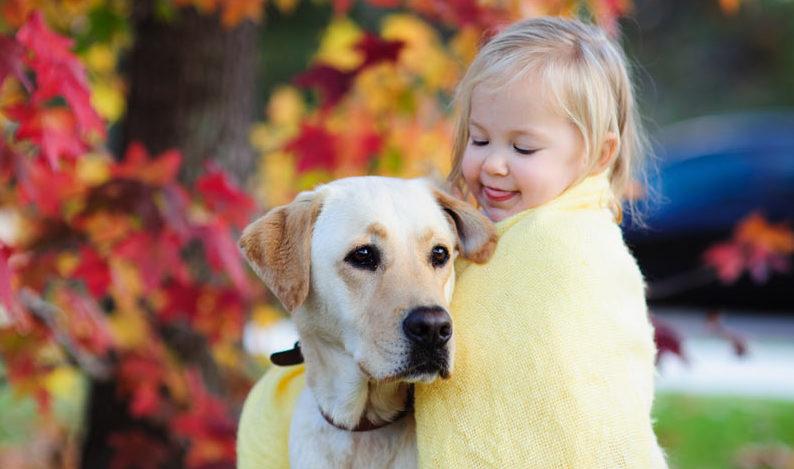 En hvit golden retriever sammen med et barn med blondt hår som stikker tungen ut, ser ned på hunden og forsøker å dele det gule teppet sitt med den.