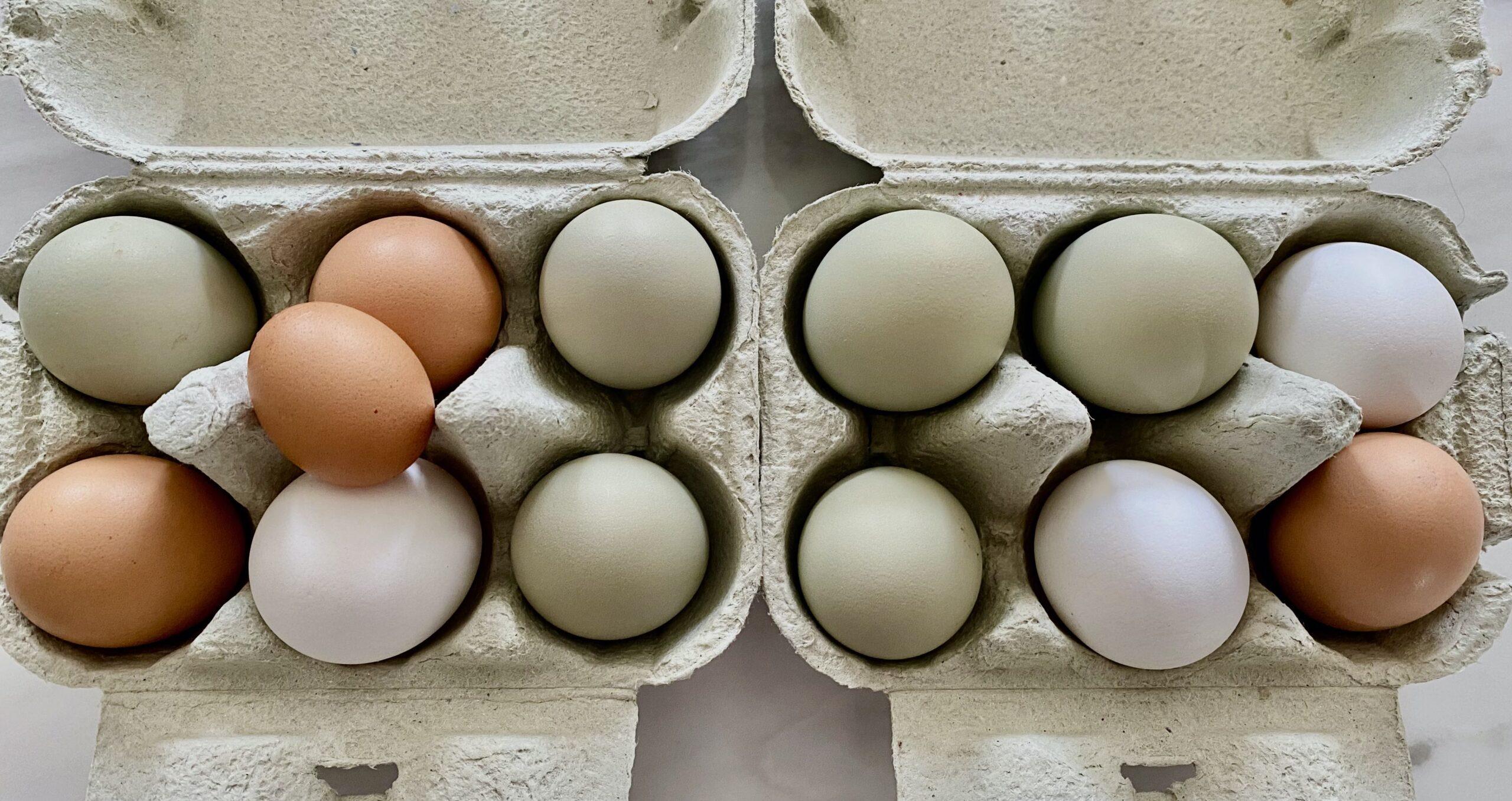Ägg i äggkartonger