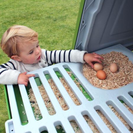 En liten pojke plockar ägg från ett Eglu-hönshus