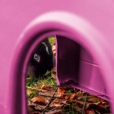 En kanin med blå ögon tittar genom ett rosa Zippi-gömställe