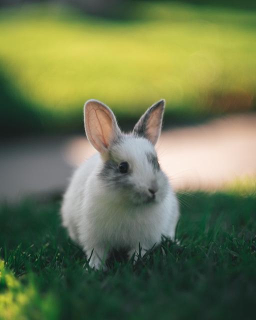 Kaniner Som Parar Sig