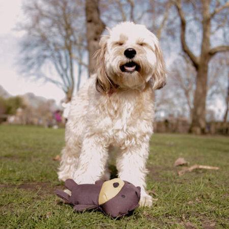 Vit hund som leker med en mjuk nalle-leksak i en park