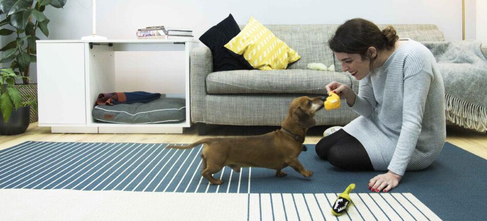 En tax leker inomhus med sin ägare med hundsängen Fido Nook i bakgrunden