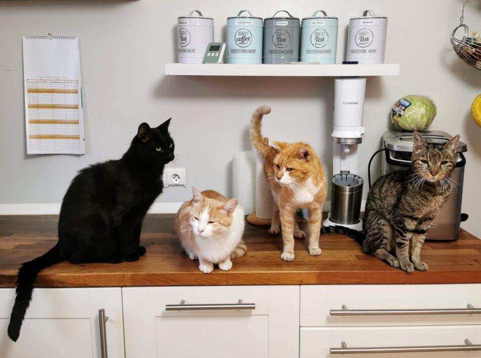Fyra katter sitter tillsammans på en köksbänk