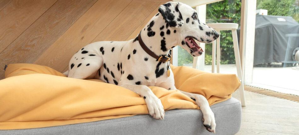 en dalmatiner ligger på hundsängen Topology med bäddmadrassen beanbag