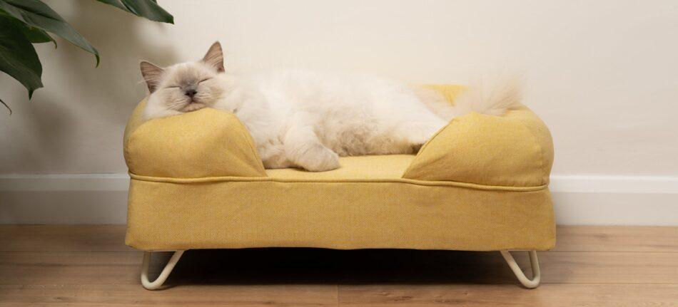 en ragdoll sover på en gul bolsterbädd för katter