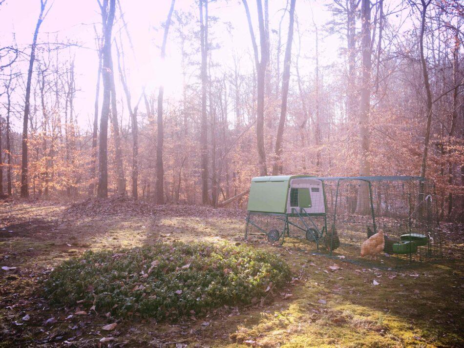 Höns i en Eglu-hönsgård i en höstfärgad skog